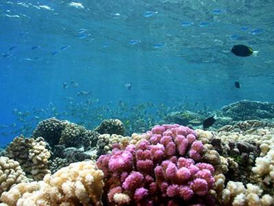 澳洲大堡礁、墨尔本10日纯玩游(牛排餐、抱考拉)
